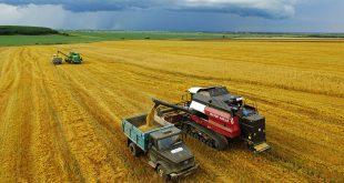 РФ в этом сельхозгоду останется мировым лидером по экспорту пшеницы