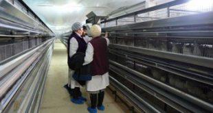 Первую в регионе перепелиную ферму открыли в Сахалинской области